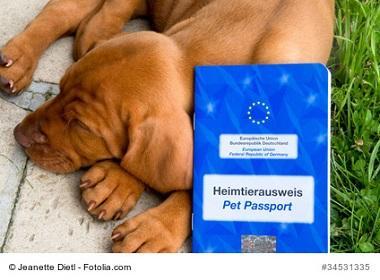 EU Heimtierausweis beim England Umzug